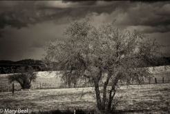 Mary Bixler Beal | Williamson Valley