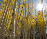 Ruthjollyphotography | Flagstaff