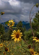 Valerie McElfresh | Flagstaff