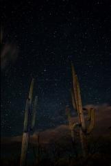 AJ Ringström | Saguaro National Park East