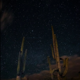 AJ Ringström‎ | Saguaro National Park East