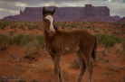 Archie Tucker‎ | Monument Valley