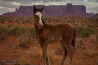 Archie Tucker | Monument Valley