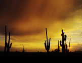 Dave Anderson‎ | Apache Junction
