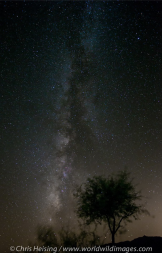 Chris Heising | Tucson
