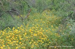 Dawn Hoehn Hagler   Saguaro NP