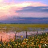 Jody M. Tanner | Garland Prairie