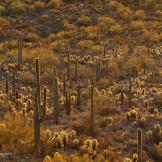 Kathleen Reeder | Tucson