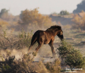 Lisa J Swanson Photography | Maricopa