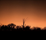 Patrick Cobb | Saguaro NP
