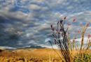 Sara Marisa | Four Peaks Wilderness