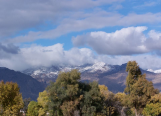 Wendy Dunham | Tucson