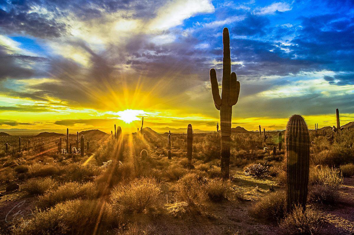 Sun City West Az >> Friday Fotos: Arizona in Yellow | Arizona Highways