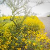 Cheryl Caffarella Wilson | Tucson