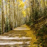 Focus On Nature Photography | Flagstaff