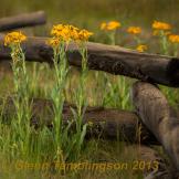 Glenn Tamblingson | Hart Prairie