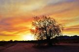 Jack Partin | Apache Junction