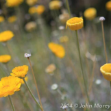 John Morey Photography | Tonto National Forest