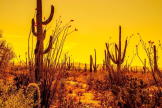 Mark Johnson | Saguaro National Park