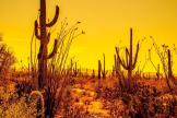 Mark Johnson | Saguaro National Park