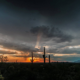 Ron Pelton Jr. | Sonoran Desert