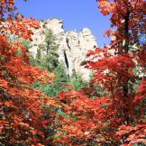 Shannon Hastings | Oak Creek Canyon