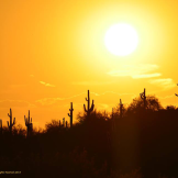 Vilma's Everyday Photos | Phoenix