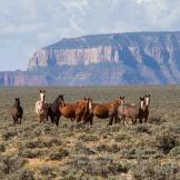 Aaron Newman | Navajo Nation