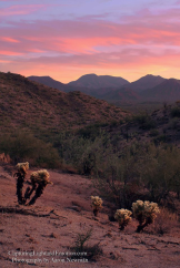 Aaron Newman   South Maricopa Mountains Wilderness