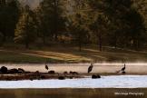 Andrea Brundage   Hawley Lake