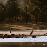 Andrea Brundage | Hawley Lake
