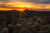 Bob Miller   Organ Pipe Cactus Wilderness