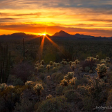 Bob Miller | Organ Pipe Cactus Wilderness