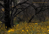 Dancing Snake Nature Photography   Chiricahua Mountains