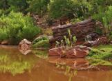Dave Anderson   Carrizo Creek