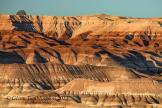 Glenn Tamblingson   Little Painted Desert