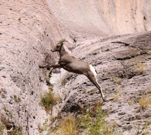 Harry Ford | Aravaipa Canyon Wilderness