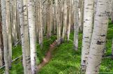 J.T. Dudrow Photography   Inner Basin Trail