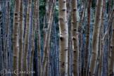 Jake Case   Kachina Peaks Wilderness
