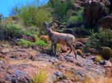 Jamie Watts | Saguaro Lake