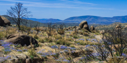 Karen Martin | Granite Mountain Wilderness