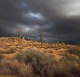 Mark Capurso   McDowell Sonoran Preserve