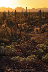Mark Capurso | Organ Pipe Cactus Wilderness