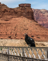 Marti Huzarski   Navajo Bridge
