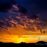 Michael Kenan | Phoenix