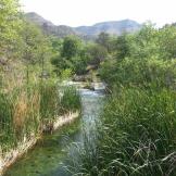 Michael Murdaugh | Fossil Springs Wilderness
