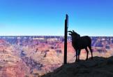 Patricia Watkins   Grand Canyon