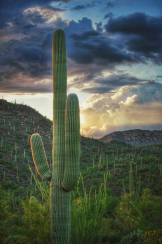 Paul Kimball | Saguaro National Park