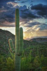 Paul Kimball   Saguaro National Park