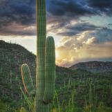 Paul Kimball | Saguaro National Park